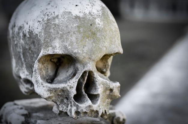 Marmeren schedel. ruimte kopiëren. close-up portret