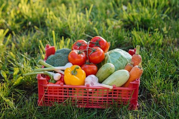 Marsh box met groenten verzameld uit de tuin