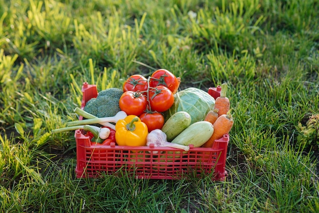 Marshbox met rijpe en mooie groenten verzameld uit een milieuvriendelijke tuin. gezonde levensstijl. milieuvriendelijke en gezonde voeding.