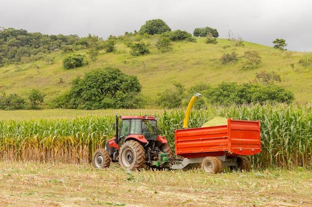 Mechanisch oogsten van transgene maïs om melkvee te voeren in guarani