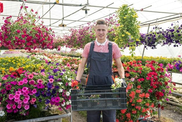 Medewerker die voor bloemen zorgt, draagt een doos met planten. werken in kassen