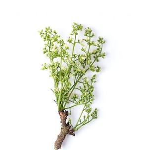 Medicinale neem bloem