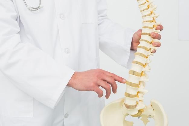 Medio sectie van een mannelijke arts met skeletmodel