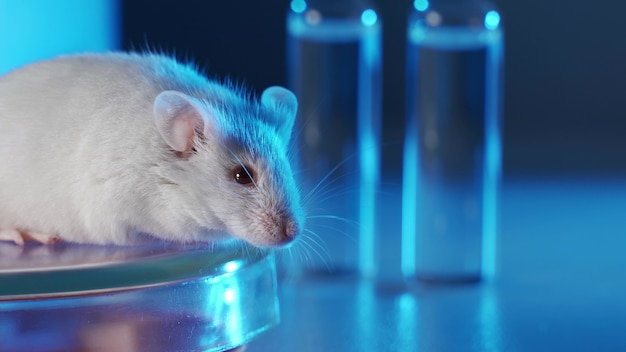 Medisch onderzoeker test vaccin experimentele drug op een laboratoriummuis.