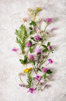 Medische bloemenkruiden, alternatieve geneeskunde. klaver duizendblad boerenwormkruid