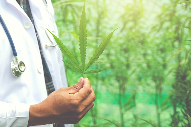 Medische marihuana, alternatief kruidengeneeskundeconcept