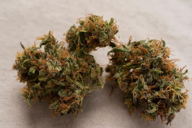 Medische marihuanabloem op recept. cannabisknop. medicinale marihuanasoort. apotheekmenu.