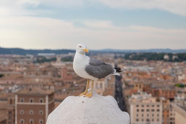 Mediterrane meeuw zitplaatsen op het dak van vittoriano in rome, italië. zomerachtergrond met zonnige dag en blauwe lucht