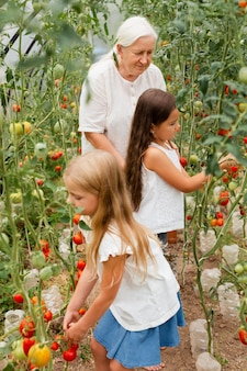 Medium shot oma en kinderen tomaten plukken