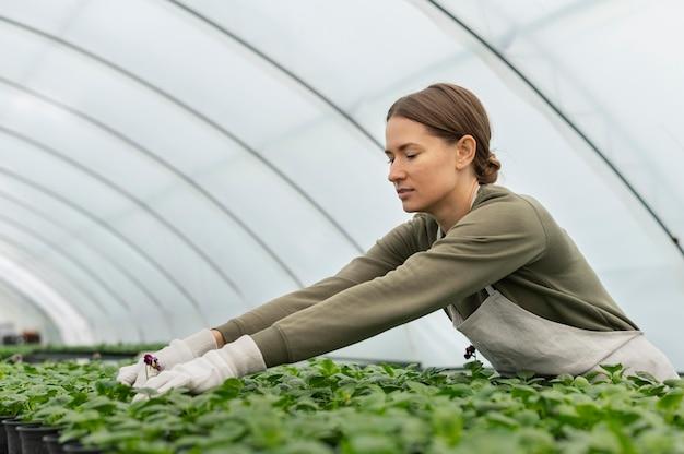 Medium shot vrouw die voor planten zorgt