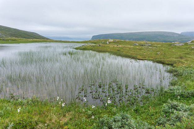 Meer en vegetatie van de toendra op het eiland soroya, noorwegen