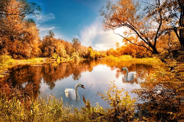 Meer met rode herfst bomen op de kust en de zwaan