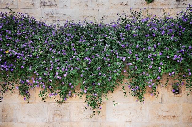 Meerdere amp bloemen op een bakstenen muur