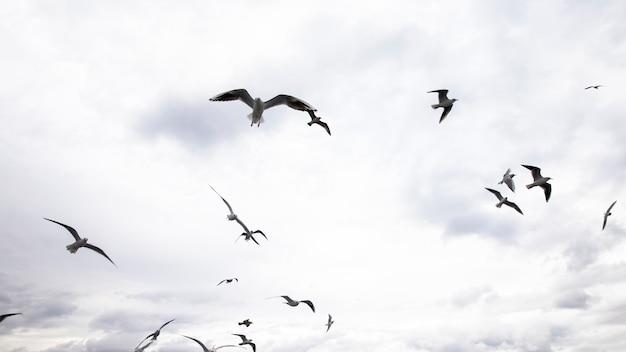 Meerdere zeemeeuwen vliegen met grijze en bewolkte hemel