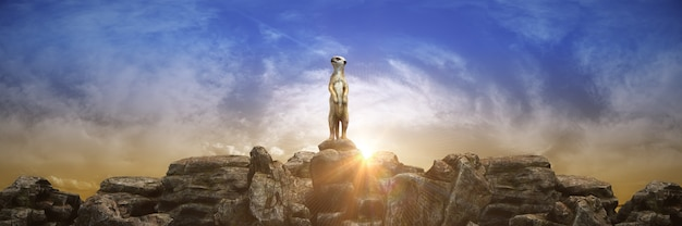 Meerkat bij zonsondergang 3d-rendering
