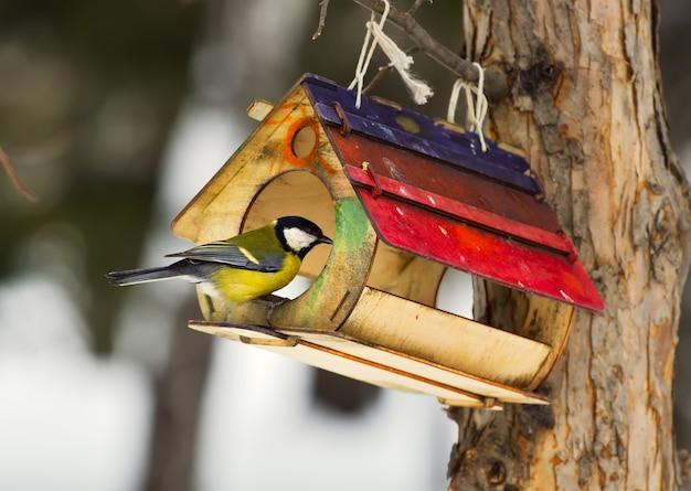 Mees zit bij de feeder. een huis met voedsel voor vogels aan een boom in het winterpark van novosibirsk