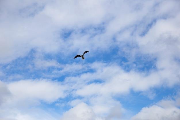 Meeuw in de lucht boven de zee