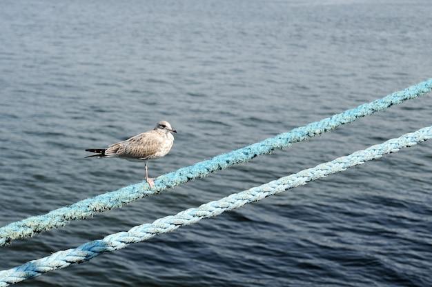 Meeuw op het touw op de achtergrond van de blauwe zee