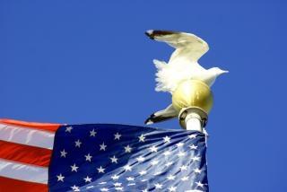 Meeuw op vlaggenmast, toeristische