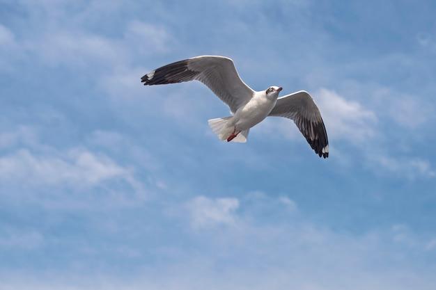 Meeuw vliegt