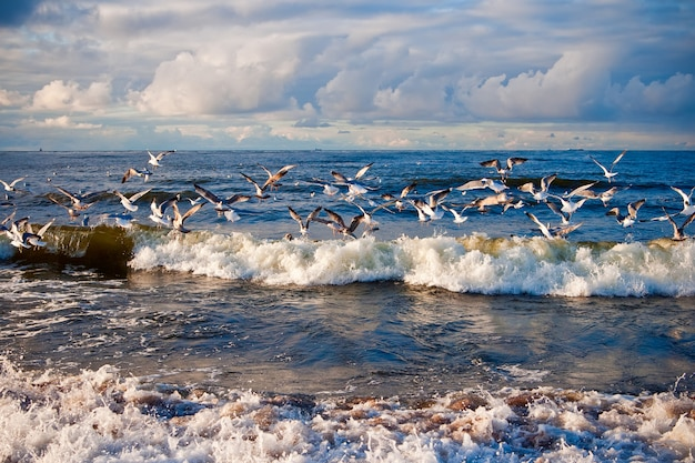 Meeuwen boven de golven in de oostzee