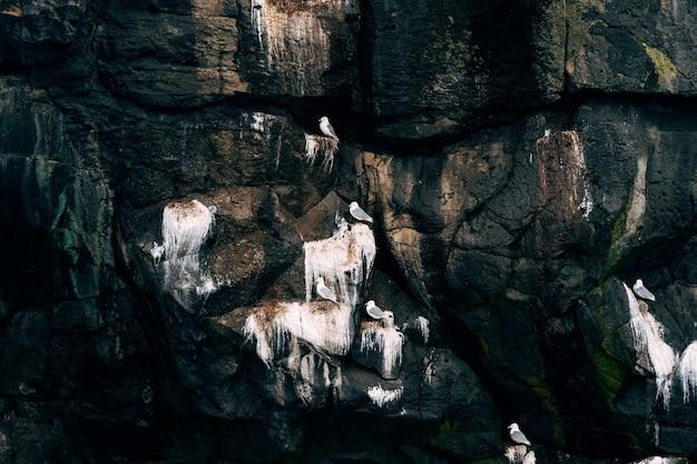 Meeuwen die op de achtergrond van de rotsenaard zitten