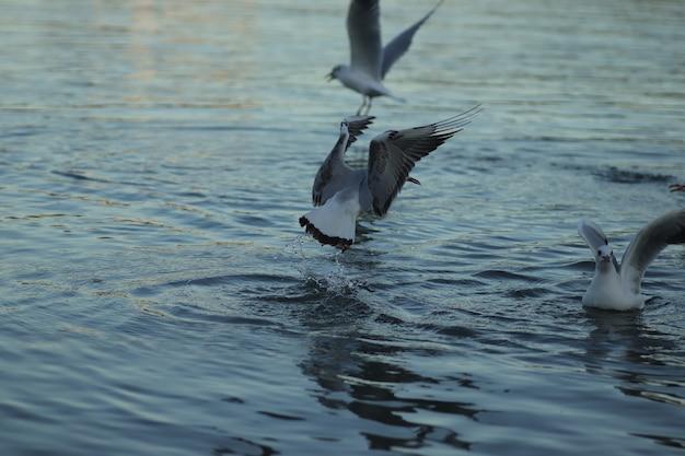 Meeuwen op het meer vragen om eten op een zonnige dag zeemeeuwen spelen in het water