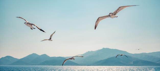 Meeuwen stijgen in de open lucht