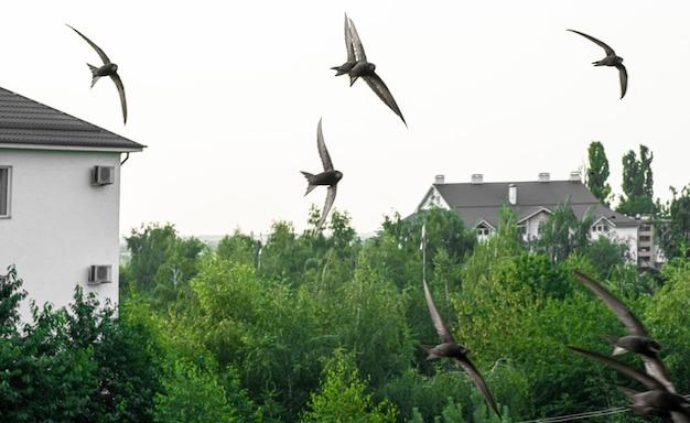 Meeuwen vliegen door de lucht