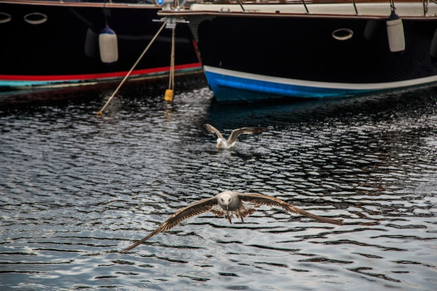 Meeuwen vliegen en eten op de pier in istanbul.