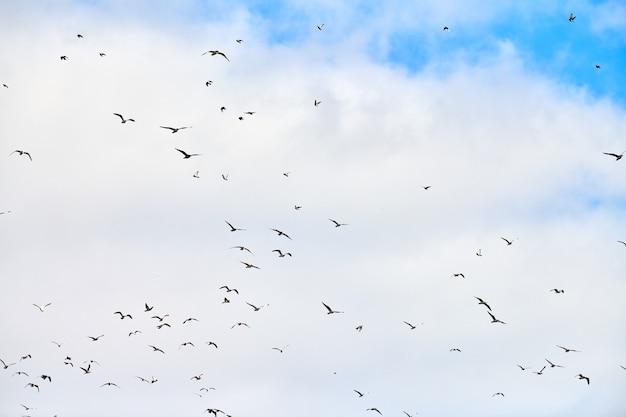 Meeuwen vliegen hoog in de blauwe lucht met witte pluizige wolken. silhouetten van zwevende witte vogels op natuurlijke lucht