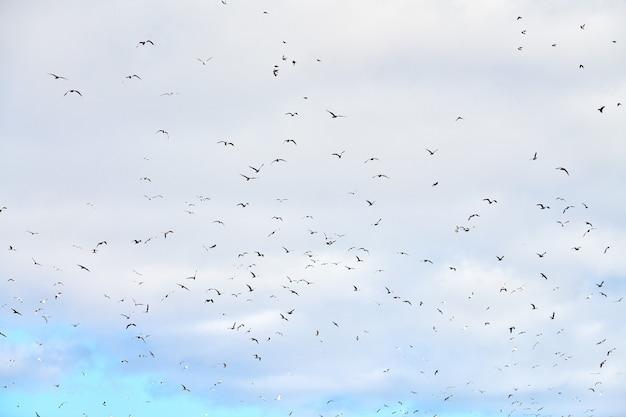 Meeuwen vliegen hoog in de blauwe lucht met witte pluizige wolken