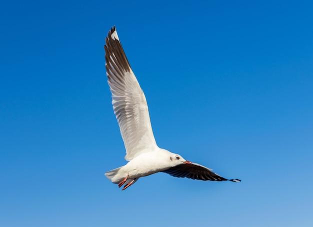 Meeuwen vliegen in de blauwe lucht de schoonheid van de natuur in de zomer