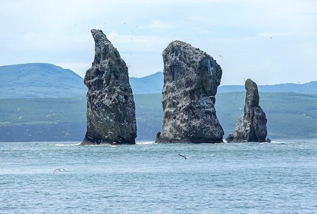 Meeuwen vliegen in de buurt van rotsen op de stille oceaan op kamtsjatka