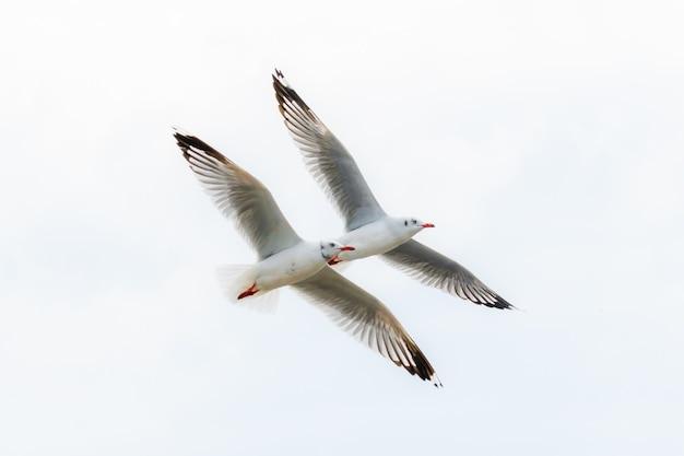 Meeuwen vliegen op hemel