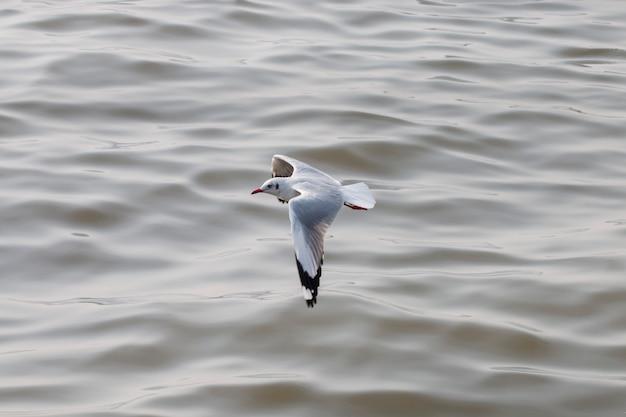 Meeuwen vliegen over de zee