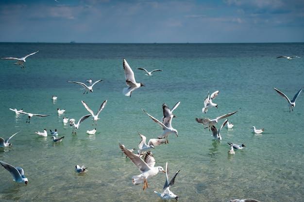 Meeuwen vliegen over het zeeoppervlak