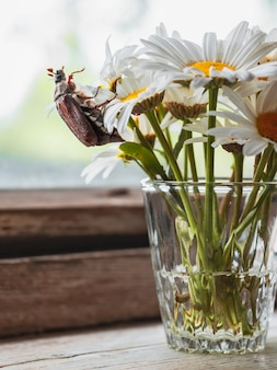Mei kever een boeket kamille bloemen in een glazen vaas op een oude rustieke houten vensterbank, een nat raam na regen en een zonnestraal.