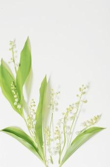 Mei lelie bloeit op een witte ondergrond