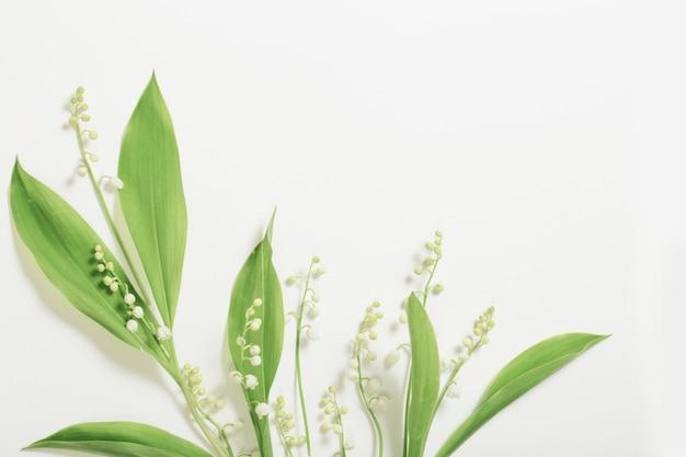 Mei lelie bloeit op witte ondergrond