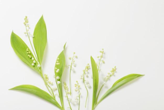 Mei leliebloemen op witte achtergrond
