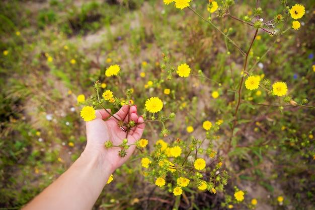 Meisje dat kleine gele bloemen in haar handen houdt