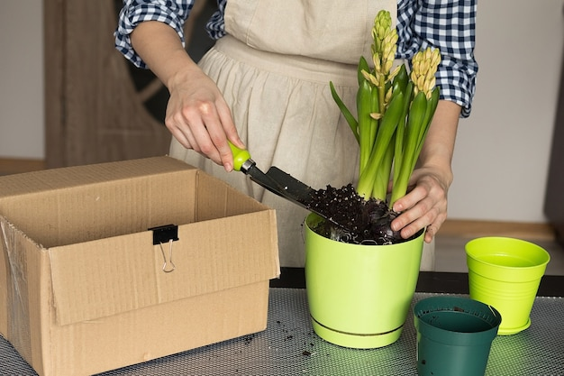 Meisje een kamerplant planten in een nieuwe pot, appartement tuinieren