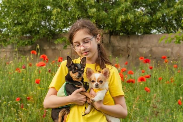 Meisje en twee chihuahua's in de armen in de zomer buiten. tienermeisje op een veld met papavers.