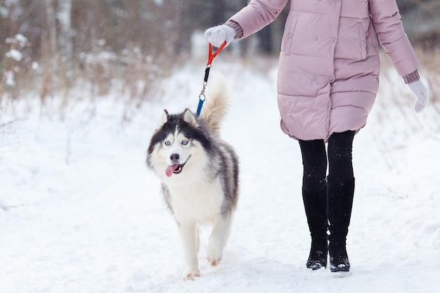 Meisje met een hond op een wandeling in het bos, husky.