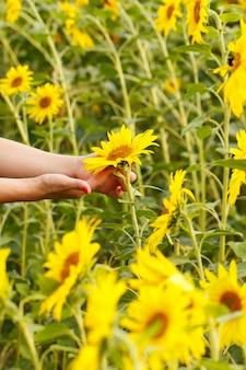 Meisje met zonnebloemen