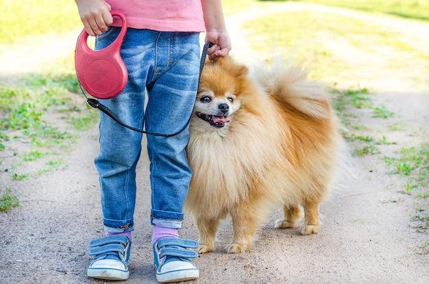 Meisje opleiding hond op straat. baby leert spitz gehoorzaamheid. kind wandelen met huisdier aan de leiband. spitz die het commando uitvoert om te zitten. voeten, benen van een persoon met een pommeren