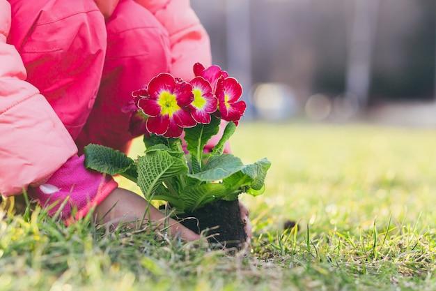 Meisje plant een lentebloem