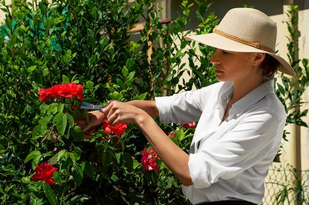 Meisje snijdt rozen met een schaar uit een struik.