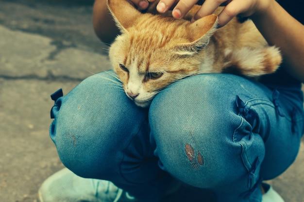 Meisje streelde een kat dakloze kat